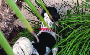 kosher_dog_july
