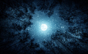 Beautiful night sky, the Milky Way, moon and the trees.