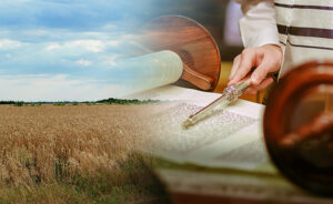 Field wheat in period harvest on background sky Torah Reading With A Pointer